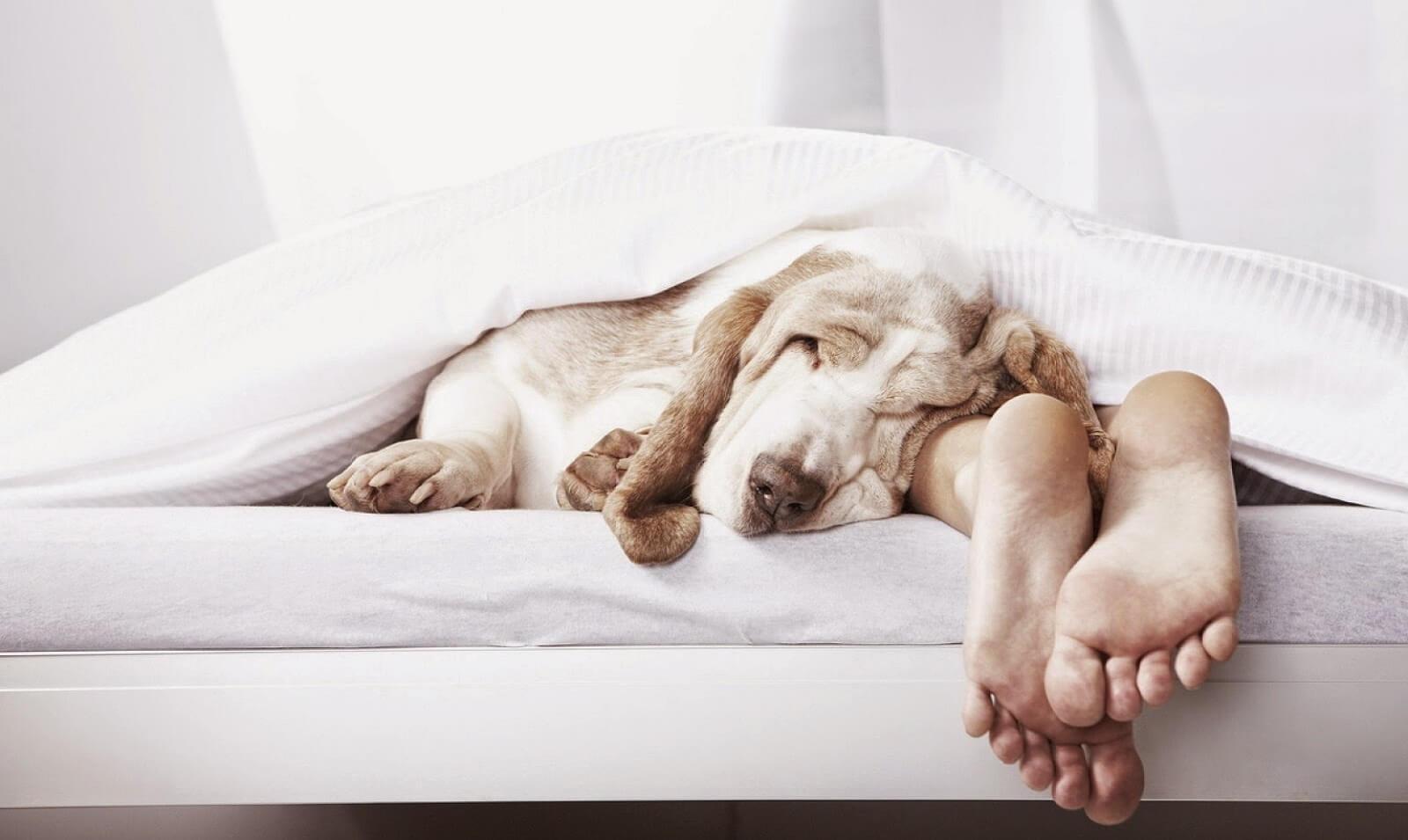Выбирай, как спать правильно!