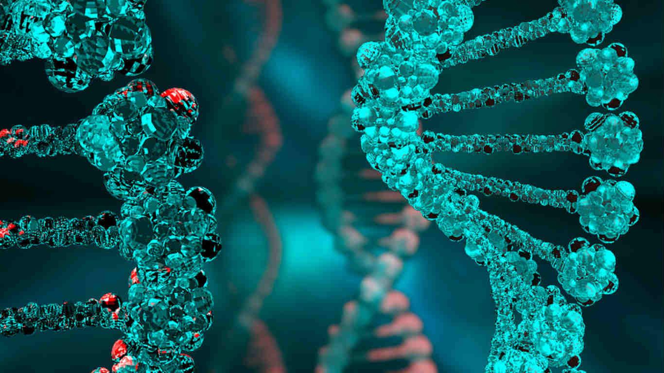 Виноваты гены?